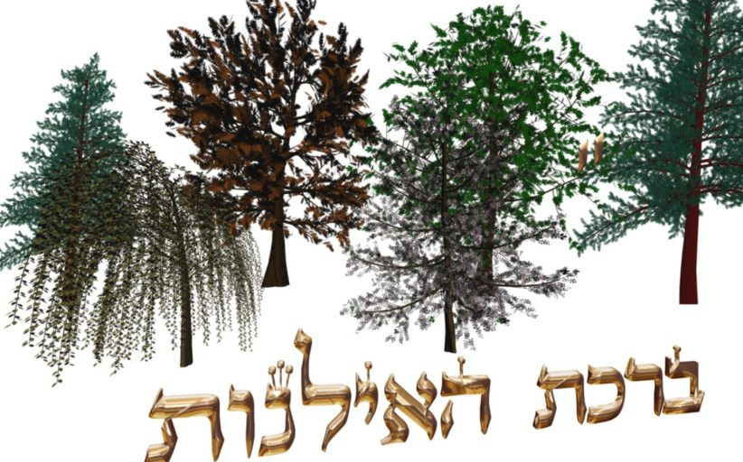 Ayin Itshak - La bénédiction des arbres - Cours du Grand Rabbin D'Israël  Rabbénou Itshak Yossef Chlita