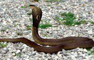 En quoi est-ce une malédiction que le serpent soit couché et qu'il mange la poussière de la terre ?  - M. Marciano