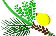 XVI Lois concernant l'assemblage du Loulav avec les feuilles de Myrte et de Saule - Torat Hamoadim