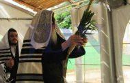 XI Lois concernant le fait que le Loulav doit nous appartenir - Torat Hamoadim