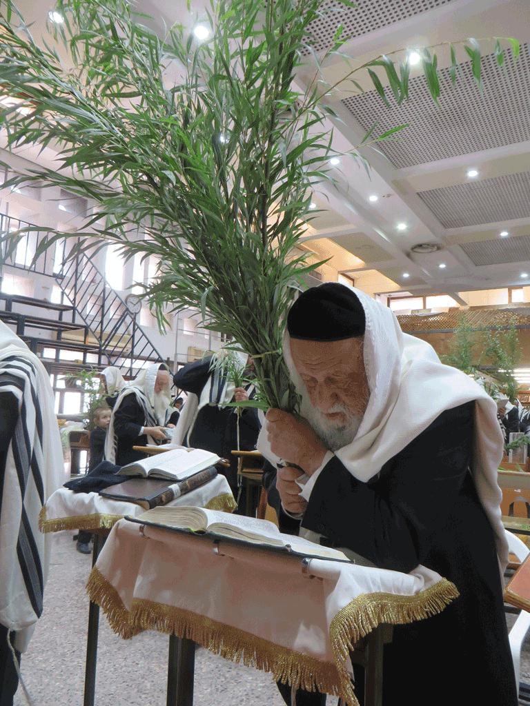 XVIII Battre la Arava - Torat Hamoadim