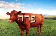 Divré Torah Parashat Para - 5776  Yéhouda Moshé Charbit