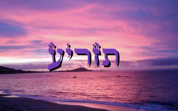 Zera Chimchon - Paracha Tazria - Darouch 2 - Michel Baruch