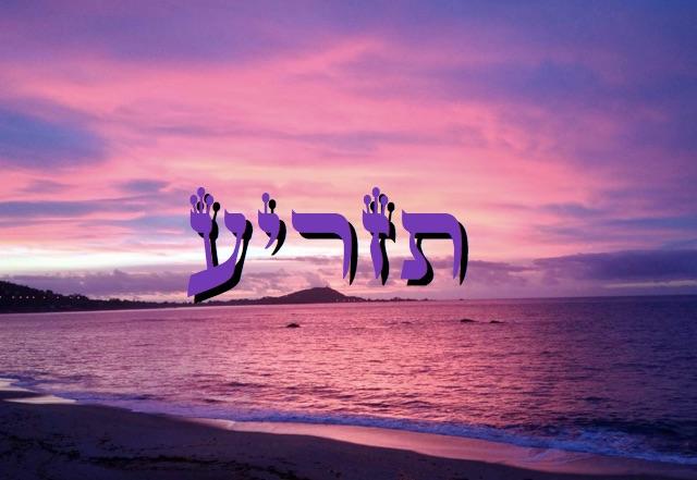 Parashat Tazria 5776 - Yéhouda Moshé Charbit