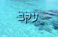 Parashat Ekev - 5776 - Yéhouda Moshé Charbit