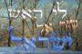 La rencontre entre Ya'akov et Essav ou la Mitsva et son intention - Réouven Carceles
