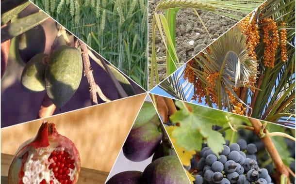 La beauté des fruits d'Israël. Quelle est leur importance? Rav Yoel Hattab