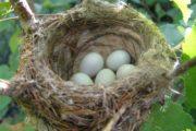 Le nid d'oiseau. Zera Chimchone sur Parachat Ki Tétsé - Michel Baruch