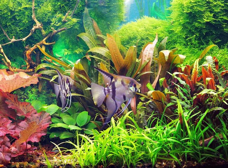 Peut-on rajouter de l'eau dans un aquarium pendant Chabbat ? Rav Yoël Hattab