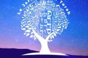 Lien entre le Ma'hatsit Hashékel et Hamane (Sms Torah)