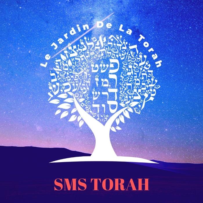 Celui qui étudie la Torah et fait des actes de bontés, deviendra perspicace. (Sms Torah)