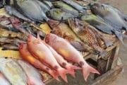 Honneur dû au Chabbat Hausse des prix du poisson. Ch. 242 §14-17