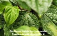Mentionner la pluie dans la Amida (4) Ch. 114. Origine de Machiv Haroua'h