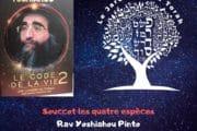 La fête de Souccot - les quatre espèces. Rav Yoshiahou Pinto